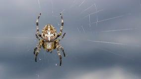 Ogrodowego pająka obsiadanie i piękna pajęczyna zdjęcia royalty free