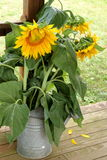Ogrodowego przyjęcia słonecznika bukiet Obraz Stock