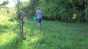 Ogrodowej pracownika mężczyzna wody owocowy drzewo przy sadu ogródem z podlewanie garnkiem 4K zbiory