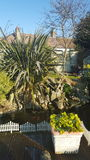 Ogrodowej rajów kwiatów drzew naturalnej natury rybiej wody cechy stawowi garnki mieścą decking Obrazy Stock