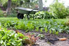 ogrodowi łóżka z młodzi świezi ziele zdjęcia stock