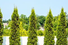 Ogrodowi drzewa Obraz Royalty Free