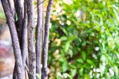 ogrodowi drzewa Zdjęcie Stock