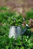 Ogrodowi narzędzia, podlewanie puszka i kwiaty na zieleni, uprawiają ogródek backgroun Obrazy Stock