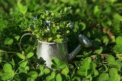 Ogrodowi narzędzia, podlewanie puszka i kwiaty na zieleni, uprawiają ogródek backgroun Zdjęcia Royalty Free