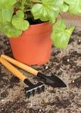 Ogrodowi narzędzia z rośliną na drewnianym tle Zdjęcia Royalty Free
