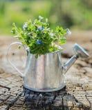 Ogrodowi narzędzia, podlewanie puszka i kwiaty na starym drewnianym tle, Obraz Royalty Free