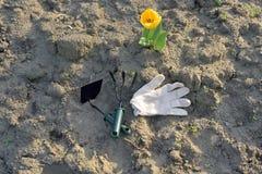 Ogrodowi narzędzia w parku Zdjęcie Royalty Free