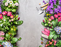 Ogrodowi narzędzia i menchii pracy rękawiczki z kolorowymi lato kwiatami na szarość kamieniu betonują tło Obrazy Stock
