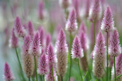 Ogrodowi pepiniera kwiaty Obraz Stock