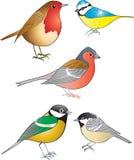 Ogrodowi ptaki Fotografia Stock