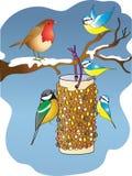 Ogrodowi ptaki karmi od ptasiego dozownika w zimie Obrazy Stock