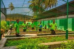 Ogrodowi robotnicy w jednolitym działaniu w ogródzie zdjęcie royalty free