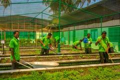 Ogrodowi robotnicy w jednolitym działaniu w ogródzie podczas słonecznego dnia obrazy royalty free
