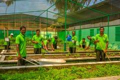 Ogrodowi robotnicy w jednolitym działaniu w ogródzie przy tropikalnym kurortem obrazy royalty free