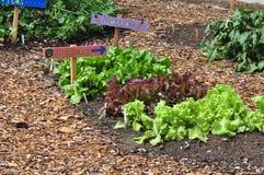 Ogrodowi warzywa Fotografia Royalty Free