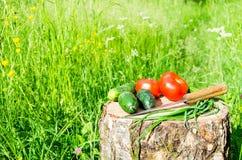 Ogrodowi warzywa Zdjęcie Royalty Free