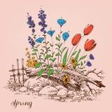 Ogrodowi wiosna kwiaty Fotografia Royalty Free