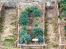 ogrodowy łóżko z włoskimi brokułami zielarskimi w zimie zdjęcia stock