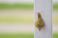 Ogrodowy ślimaczek fotografia stock