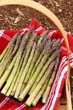 Ogrodowy asparagus Zdjęcie Royalty Free