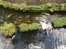 ogrodowy basen Obraz Stock