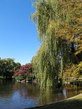 ogrodowy bostonu społeczeństwo Fotografia Stock