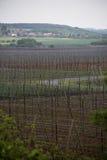 Ogrodowy chmielu krajobraz w wiośnie rolnictwo krajobraz opiek budów rzędy Fotografia Stock