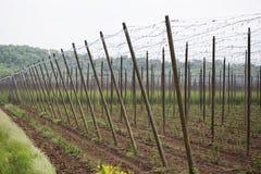 Ogrodowy chmielu krajobraz w wiośnie rolnictwo krajobraz opiek budów rzędy Zdjęcie Royalty Free