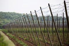 Ogrodowy chmielu krajobraz w wiośnie rolnictwo krajobraz opiek budów rzędy Obrazy Stock