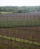 Ogrodowy chmielu krajobraz w wiośnie rolnictwo krajobraz opiek budów rzędy Obraz Stock