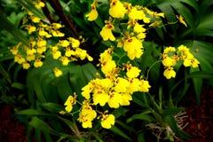 ogrodowy de botaniczny janeiro Rio Zdjęcie Royalty Free