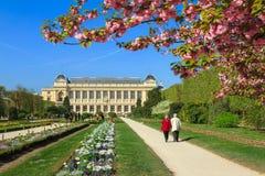 Ogrodowy des Zasadza wiosnę fotografia stock