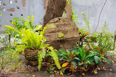 Ogrodowy drzewo zdjęcie royalty free