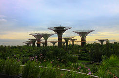 Ogrodowy drzewo Zdjęcia Stock