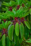 Ogrodowy drzewo z kwiatami obrazy royalty free