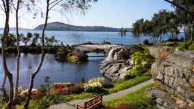 Ogrodowy flor&fjære w Norwegia, Stavanger Fotografia Royalty Free