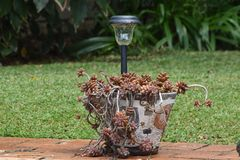 ogrodowy garnek zdjęcia stock