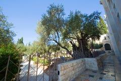 ogrodowy gethsemane Zdjęcia Stock