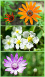 Ogrodowy i kwiat tło Zdjęcia Royalty Free