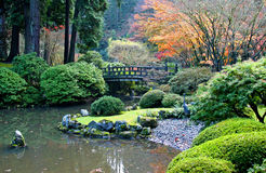 ogrodowy japończyk