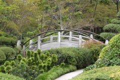 ogrodowy japończyk Zdjęcia Stock