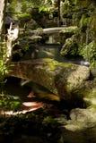 ogrodowy japończyk Fotografia Stock