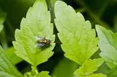ogrodowy komarnica dom Obrazy Royalty Free