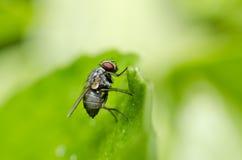 ogrodowy komarnica dom Zdjęcie Royalty Free