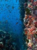 ogrodowy korala dukt Obraz Stock