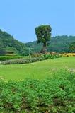 ogrodowy krajobraz Obraz Stock