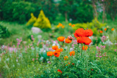Ogrodowy Kształtuje teren projekt Kwiatu łóżko, Zieleni drzewa Zdjęcia Stock