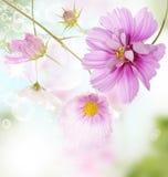 Ogrodowy kwiat Zdjęcie Stock