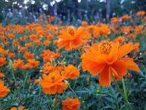 Ogrodowy kwiat obrazy royalty free